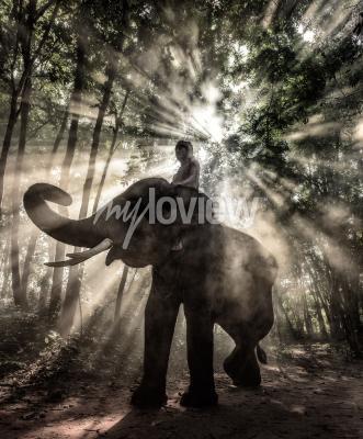 Cuadro Mahout en la provincia de Surin Tailandia elefante