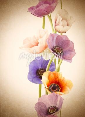 Fotomural Flores coloridas frescas de la amapola