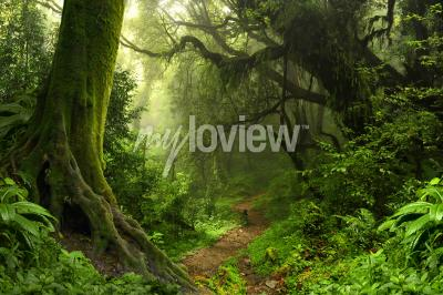 Fotomural Bosque tropical