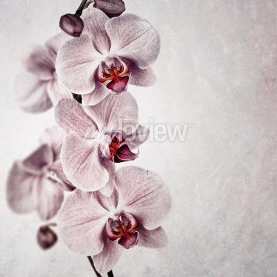 Fotomural Una delicada orquídea rosada en el fondo de estilo vintage descolorido