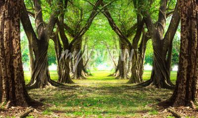 Fotomural Bosque mágico verde