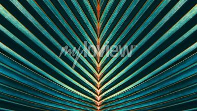 Fotomural Rayado de hoja de palma