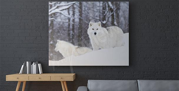 Cuadro animales del Ártico
