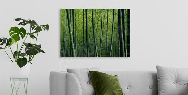 Cuadro bambú en el bosque