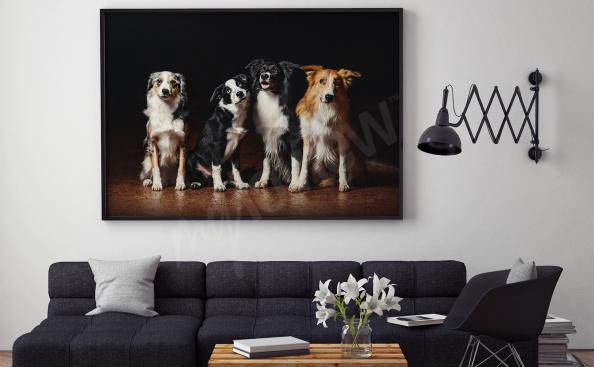 Cuadro con el perro para la sala de estar