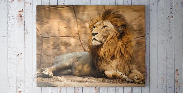 Cuadro con un león sala de estar