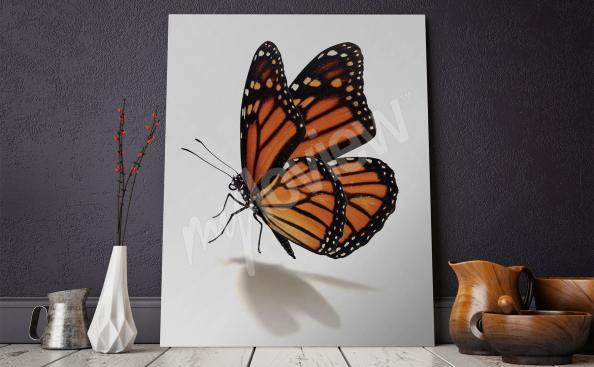 Cuadro con una mariposa