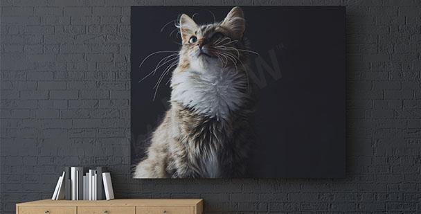 Cuadro gato sobre un fondo negro