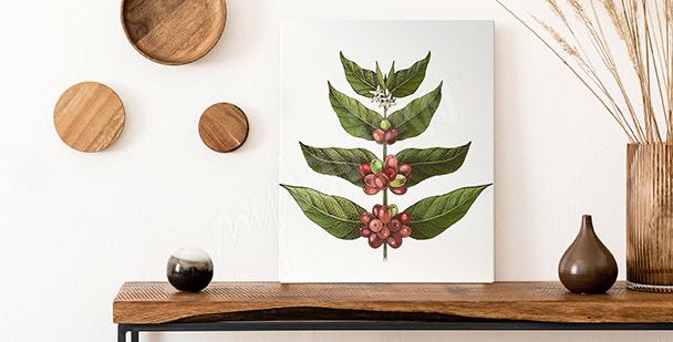 Cuadro hojas de cafeto