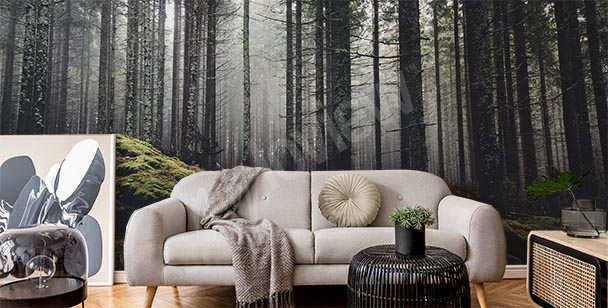 Fotomural bosque brumoso