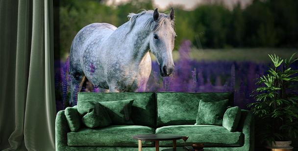 Fotomural caballo en campo de lavanda