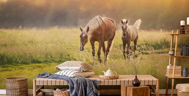 Fotomural caballos al atardecer