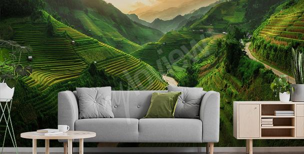 Fotomural campo de arroz