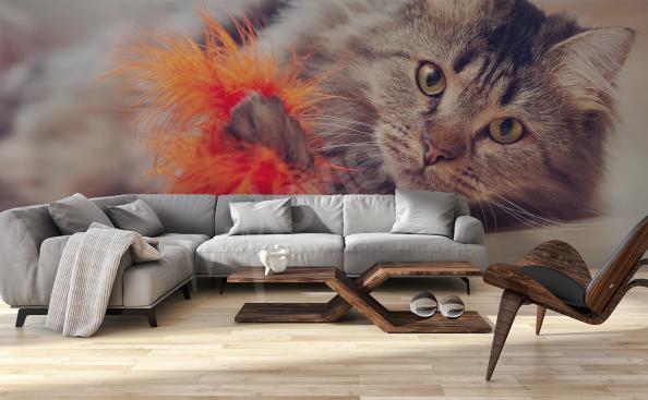 Fotomural gato para a sala de estar
