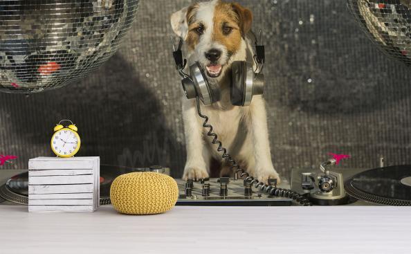 Fotomural perro dj divertido