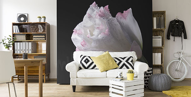 Fotomural rosa minimalista