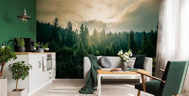 Fototapeta lesní příroda