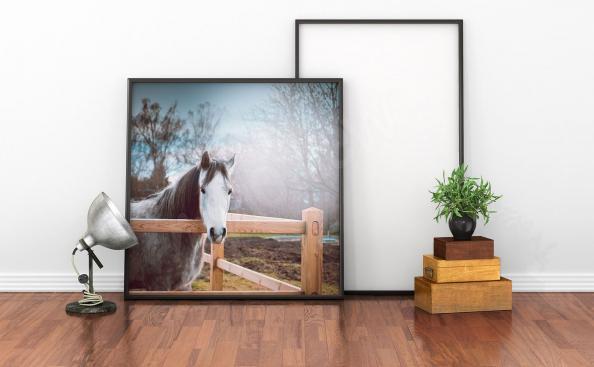 Póster caballo gris para la sala de estar